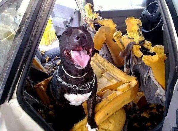 perro en un desguace