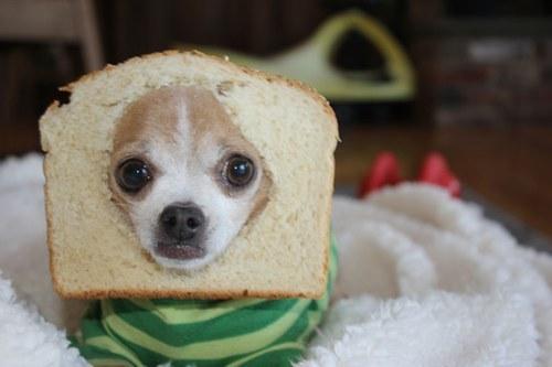 perro pan