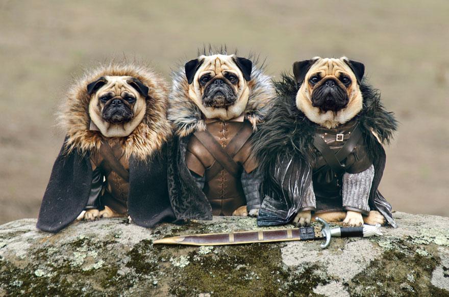 perros Juego de Tronos