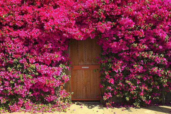 30 puertas muy especiales 15