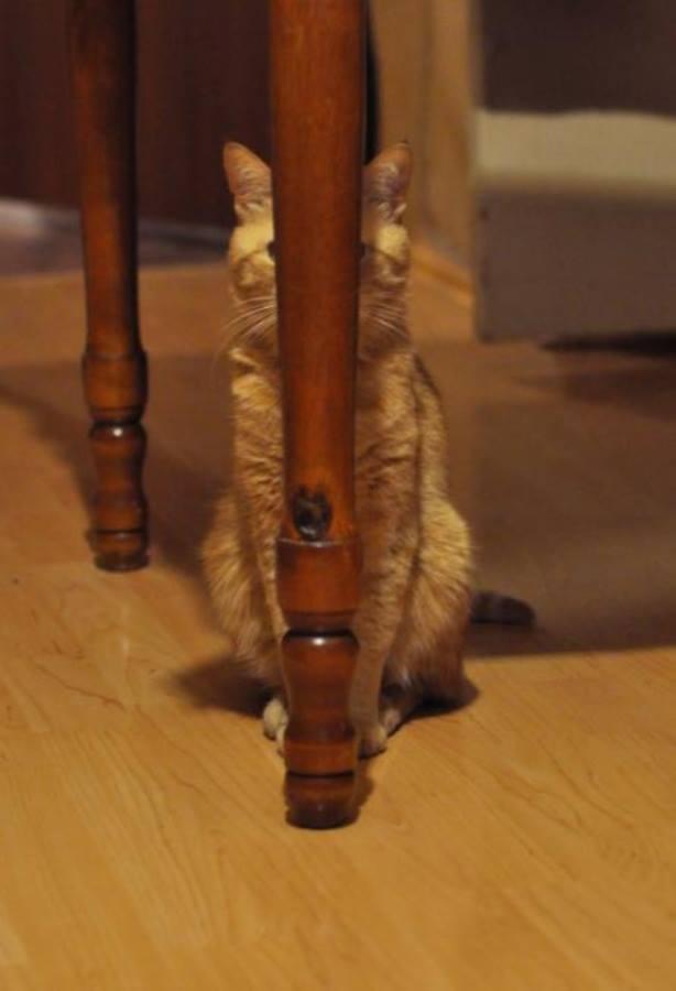 gato mal escondido