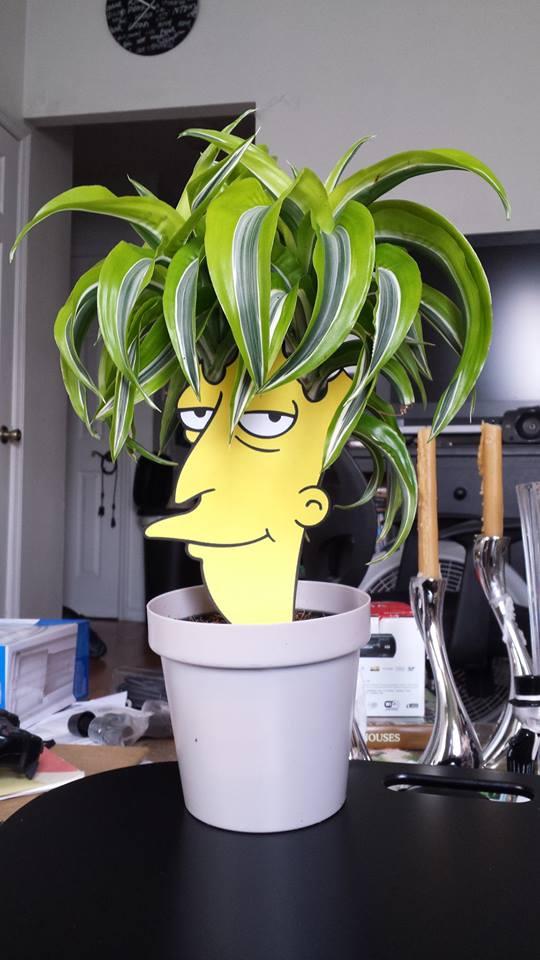 planta actor secundario bob