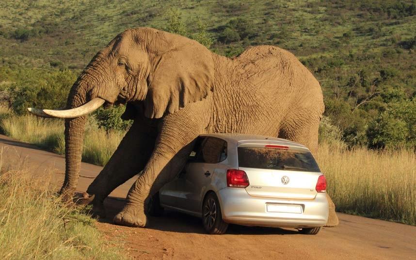 Resultado de imagen de elefante y coche en apuros