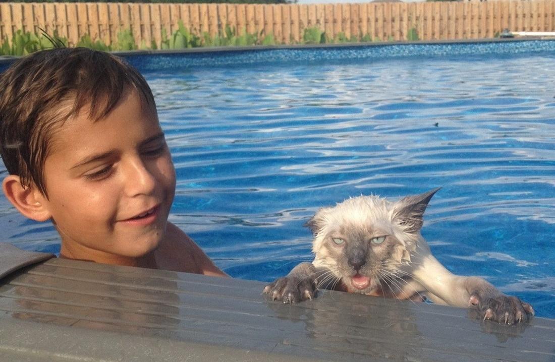 gato a punto de morir ahogado