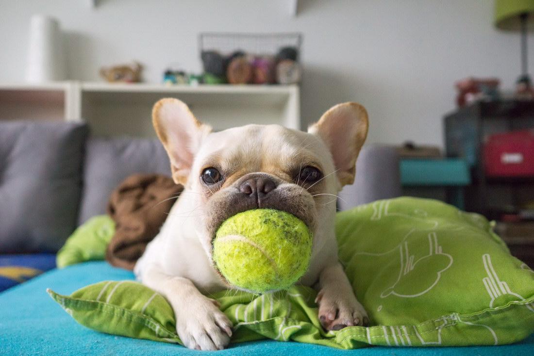 perro con ganas de jugar