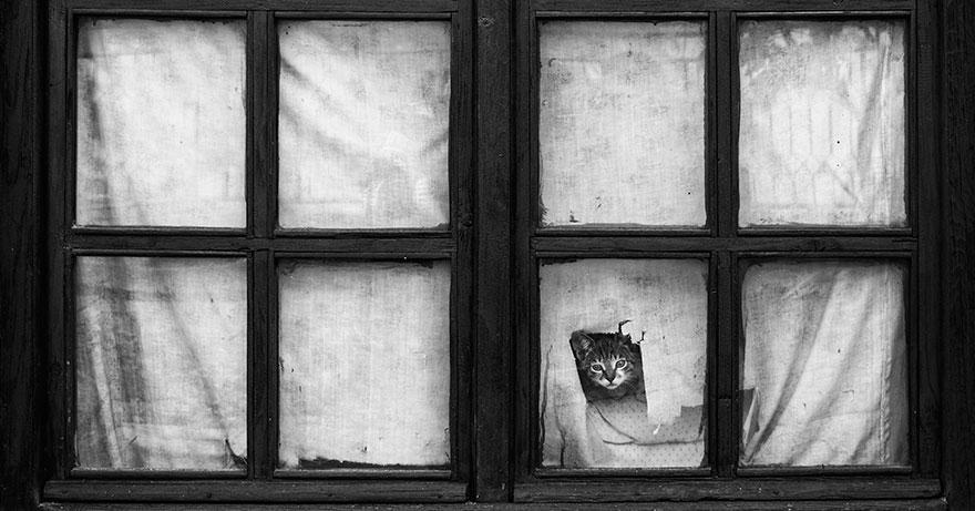 animales mirando a traves de ventanas 10