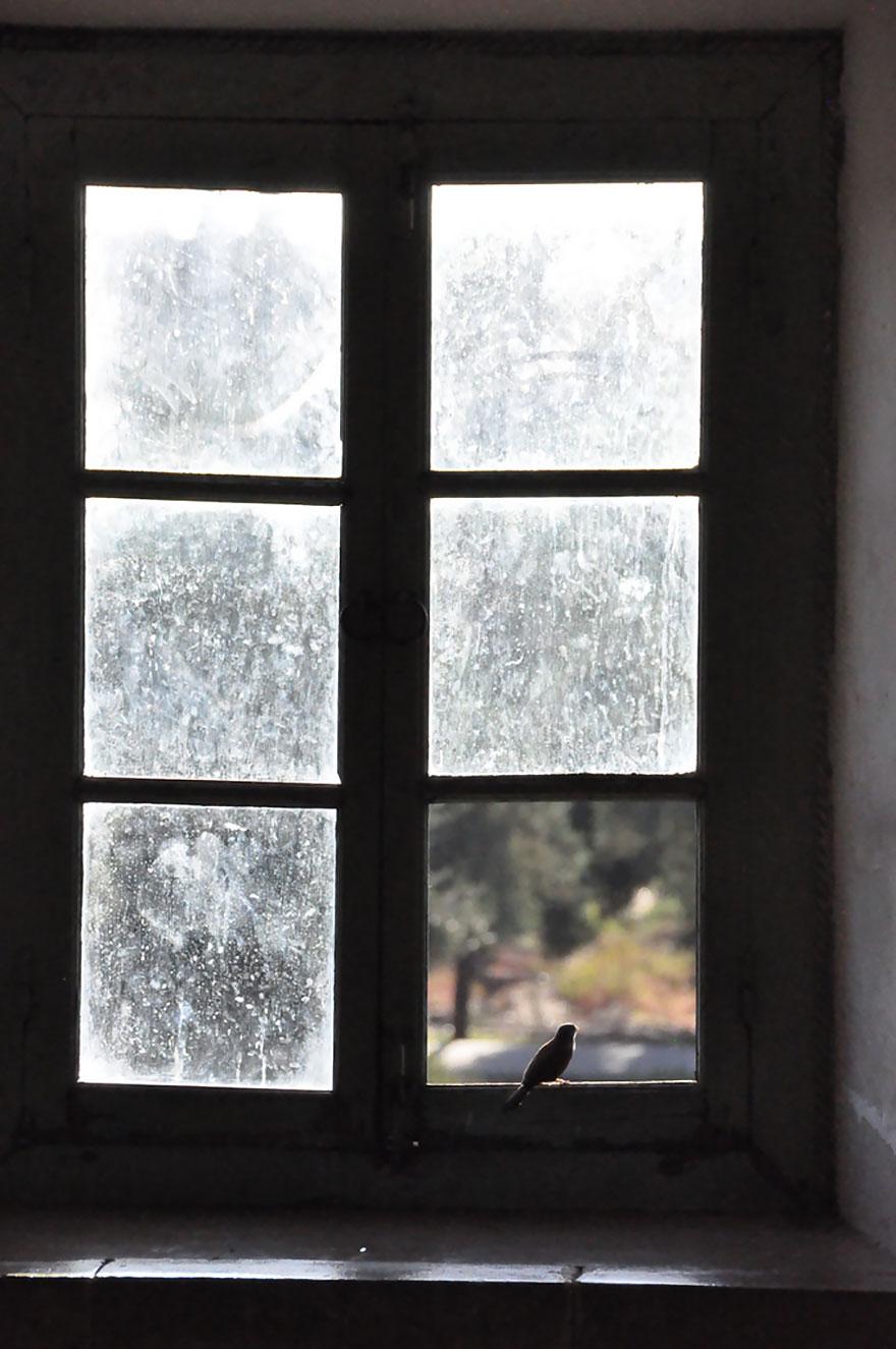 animales mirando a traves de ventanas 11