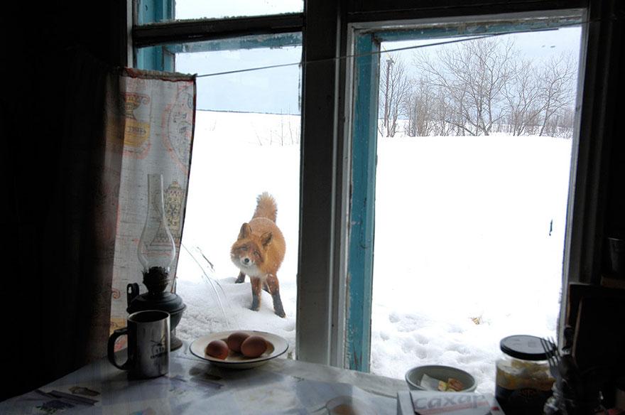 animales mirando a traves de ventanas 12