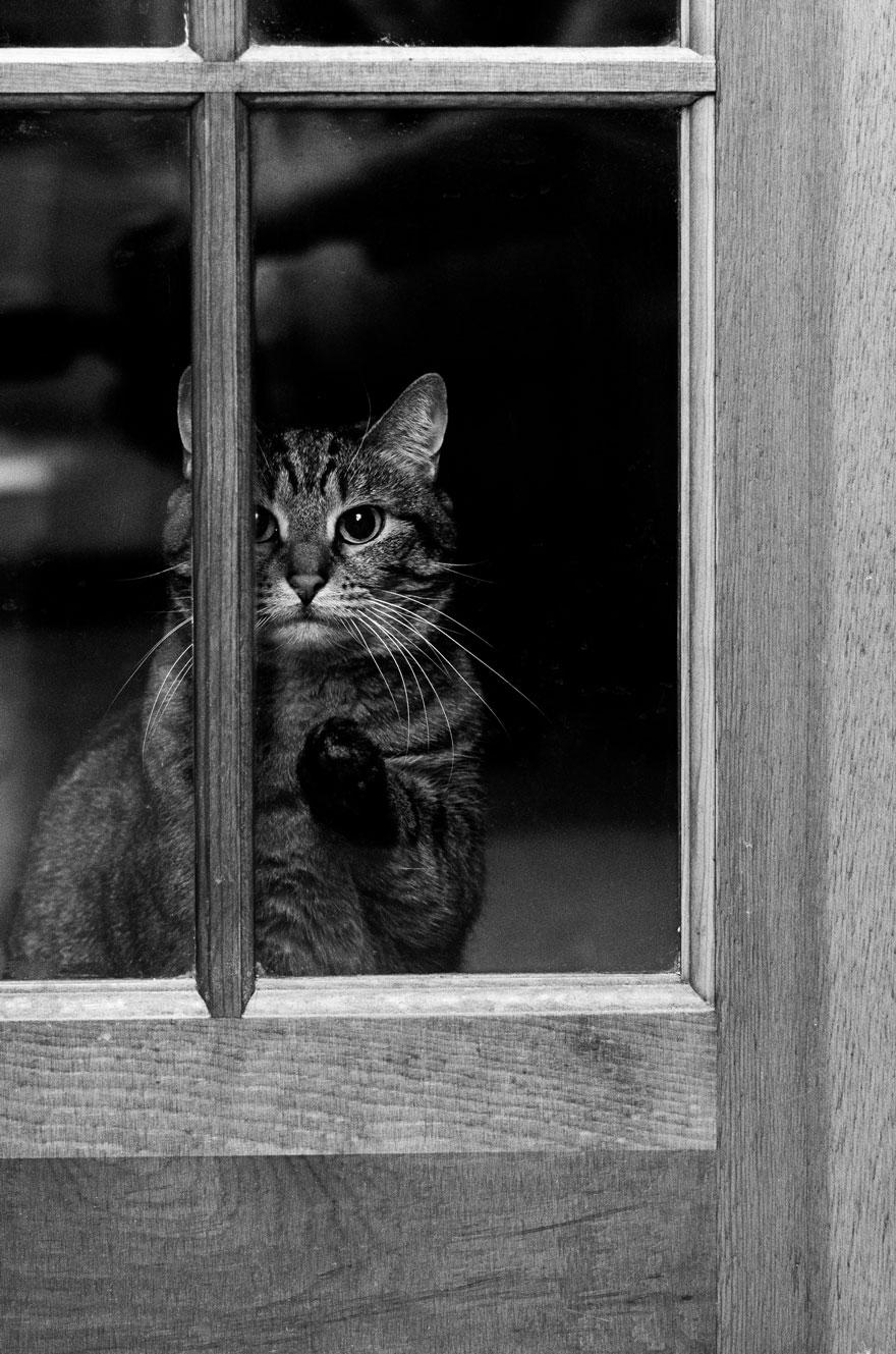 animales mirando a traves de ventanas 13