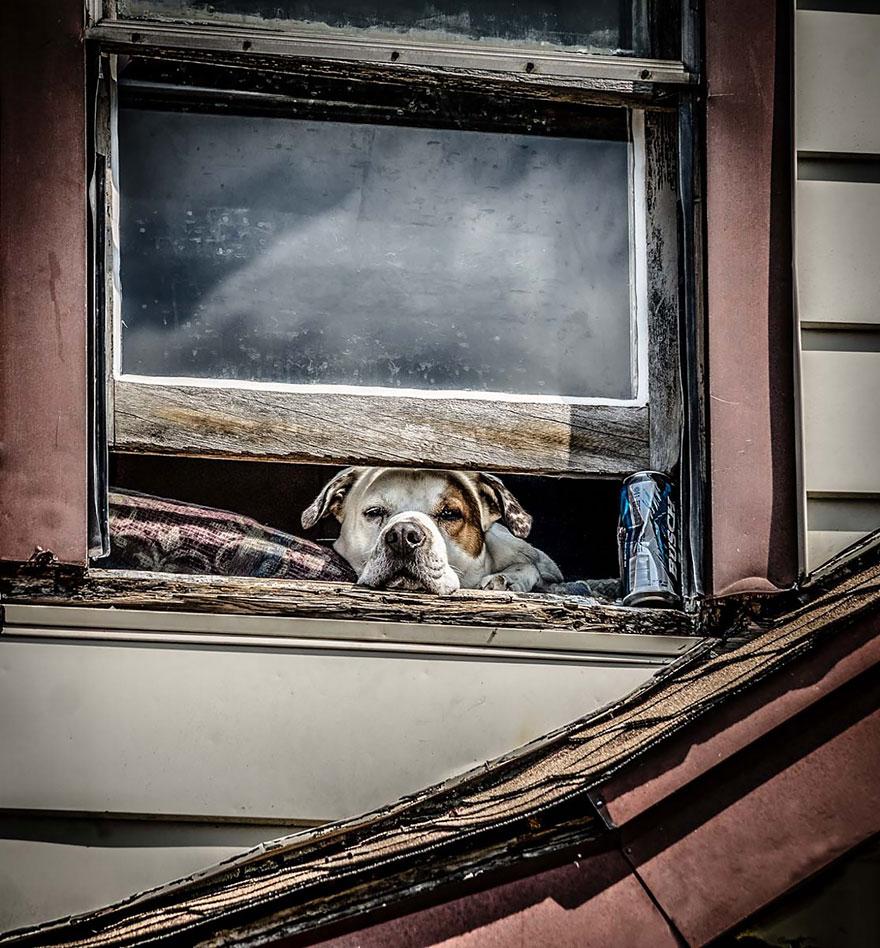 animales mirando a traves de ventanas 14