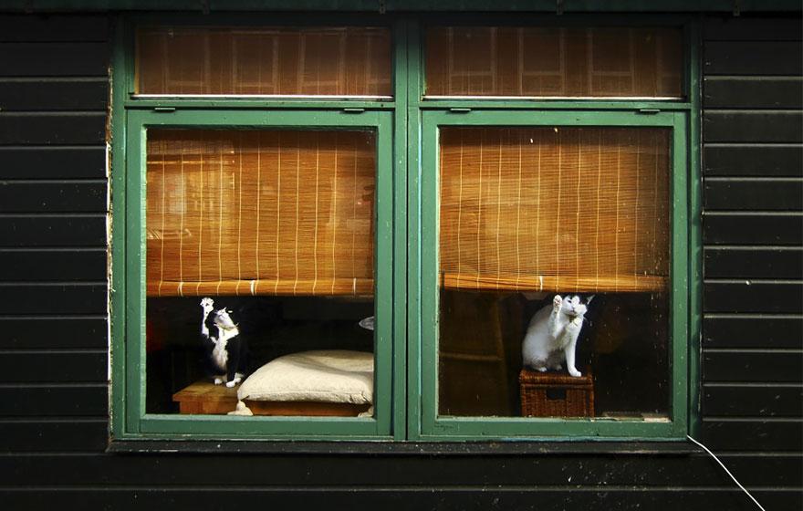 animales mirando a traves de ventanas 15