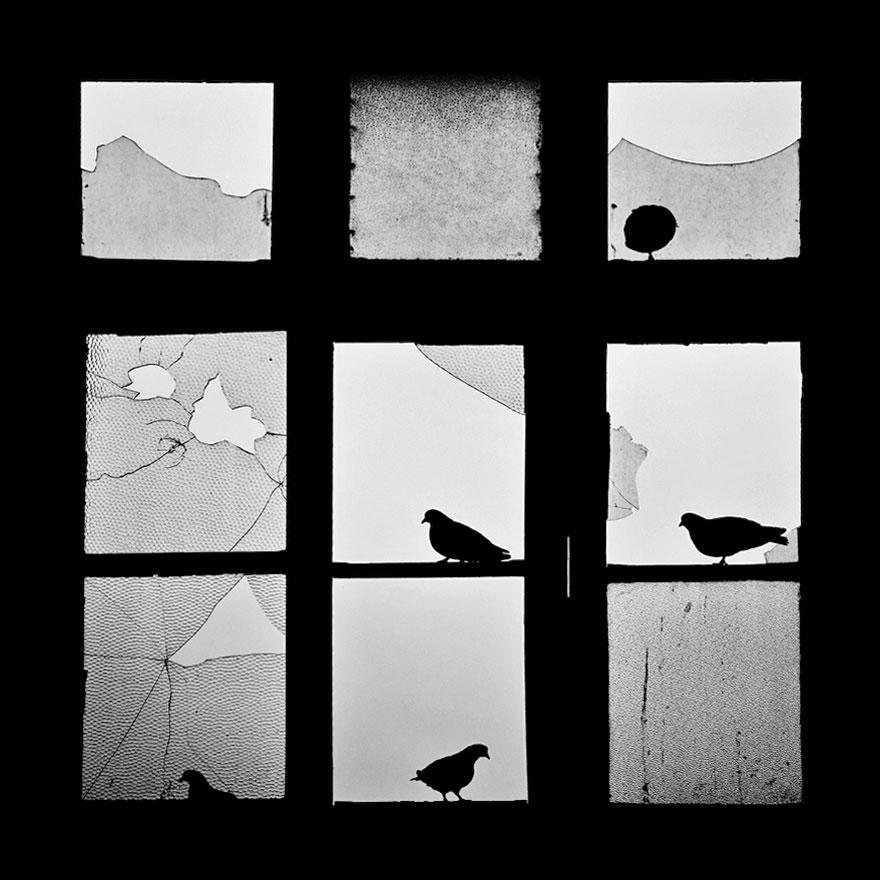animales mirando a traves de ventanas 16