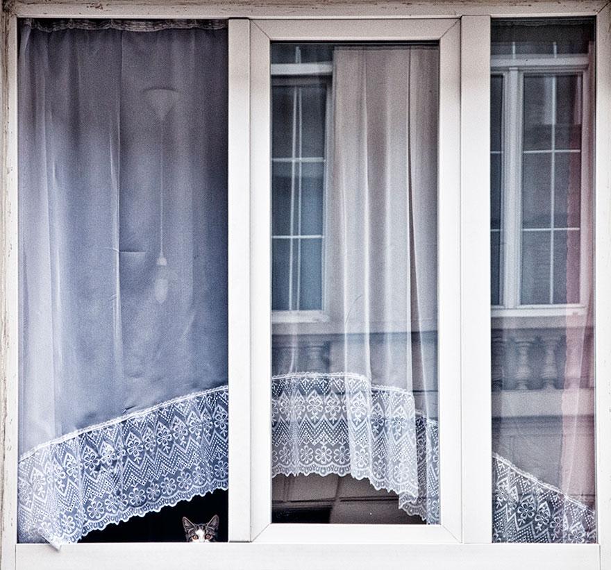 animales mirando a traves de ventanas 17