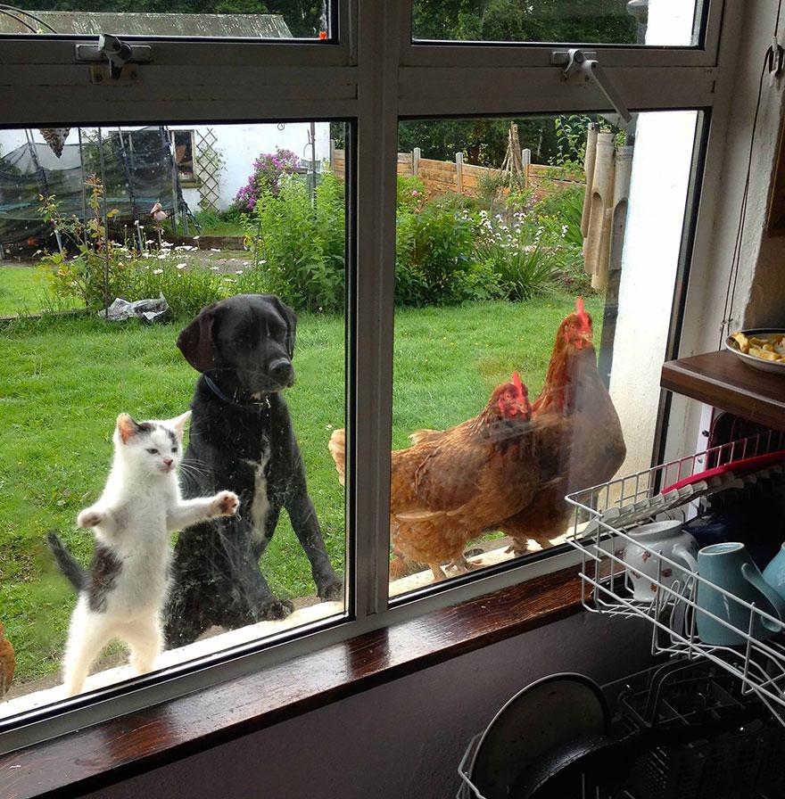 animales mirando a traves de ventanas 18