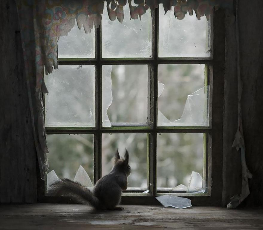 animales mirando a traves de ventanas 2