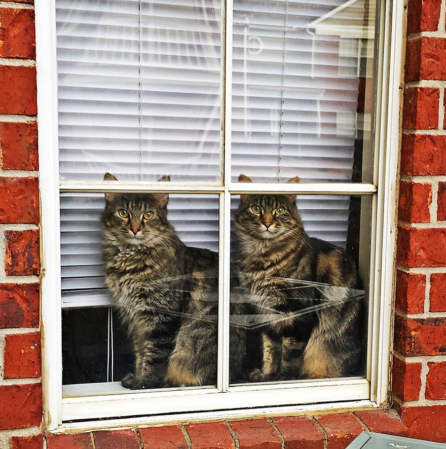 animales mirando a traves de ventanas 3