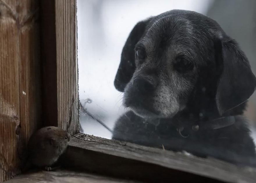 animales mirando a traves de ventanas 4