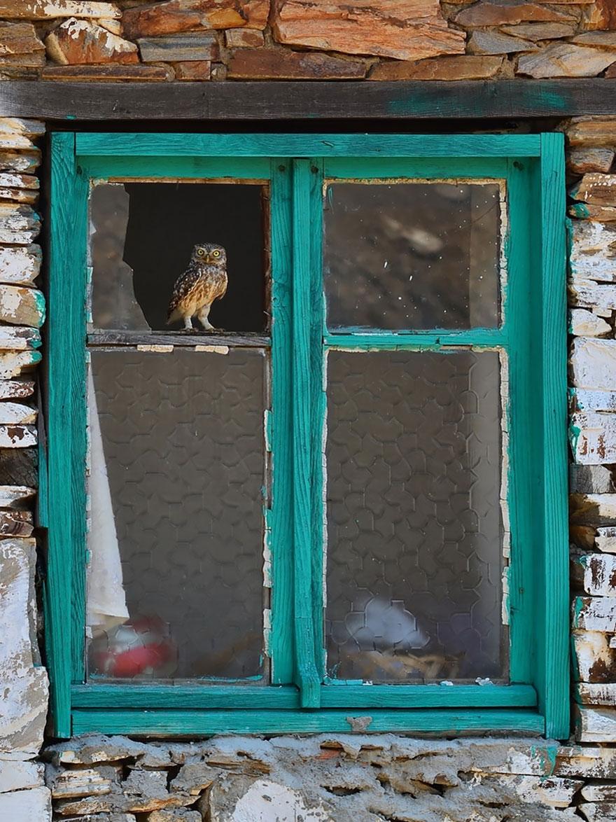 animales mirando a traves de ventanas 5