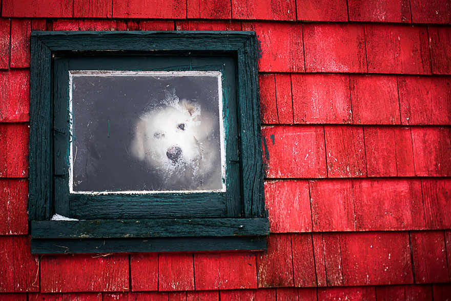animales mirando a traves de ventanas 6