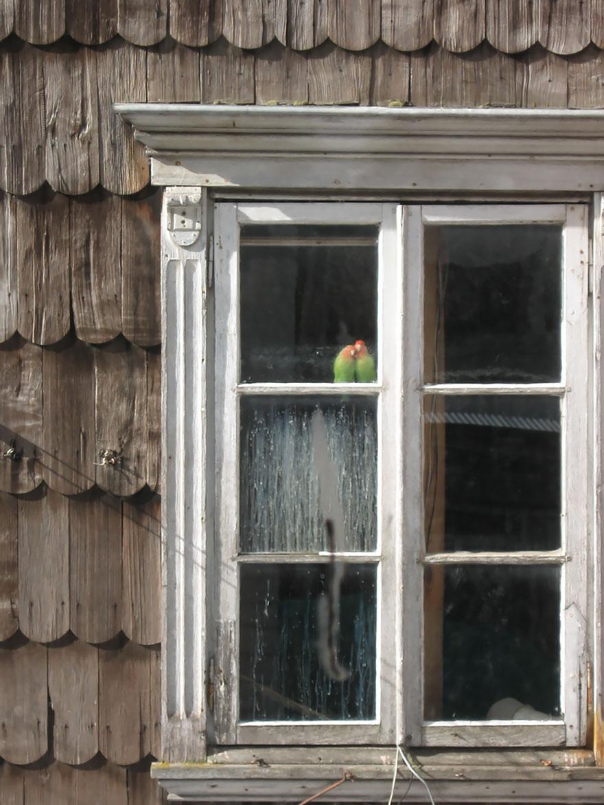 animales mirando a traves de ventanas 7