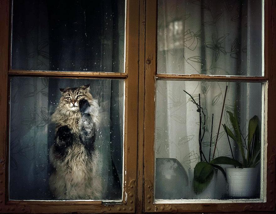 animales mirando a traves de ventanas 8