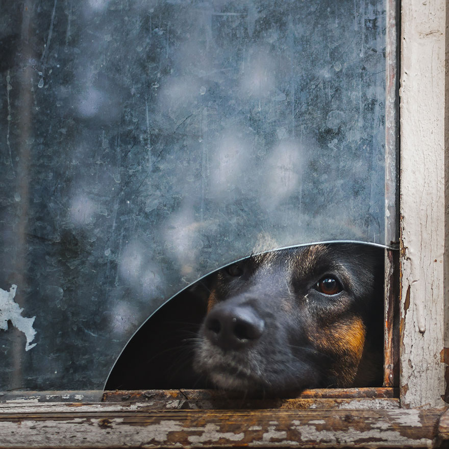 animales mirando a traves de ventanas 9