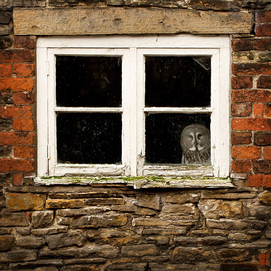 animales mirando a traves de ventanas