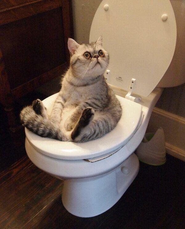 gato sentado en un vater