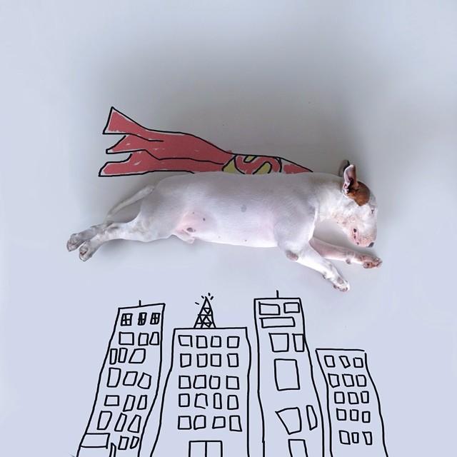 ilustraciones bull terrier 2