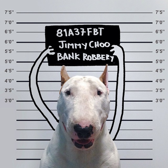 ilustraciones bull terrier 4