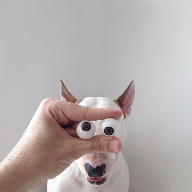 ilustraciones bull terrier 9