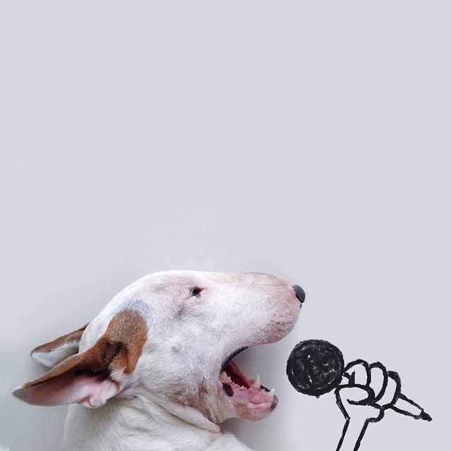 ilustraciones bull terrier