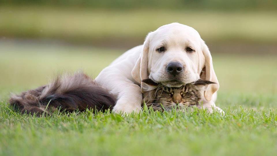 perro y gato aburridos