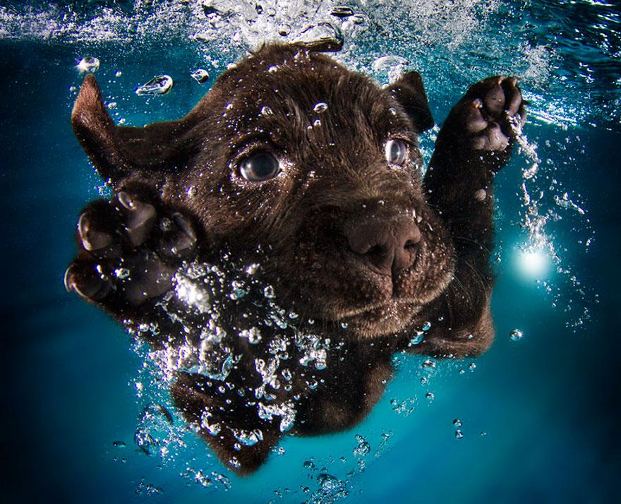 perros en el agua 10