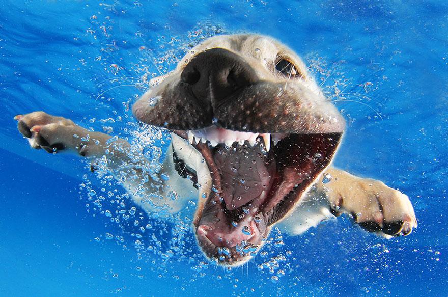 perros en el agua 2