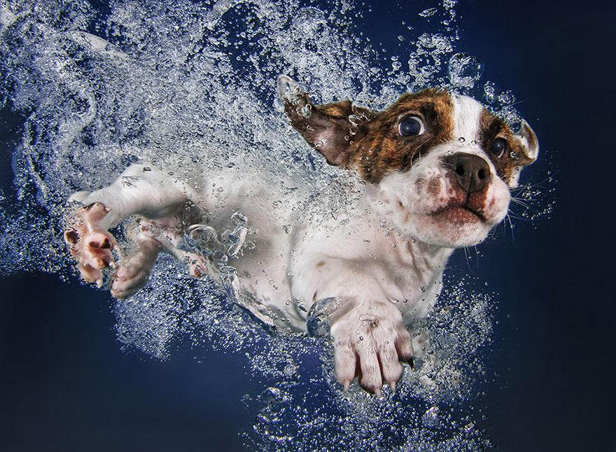 perros en el agua 5