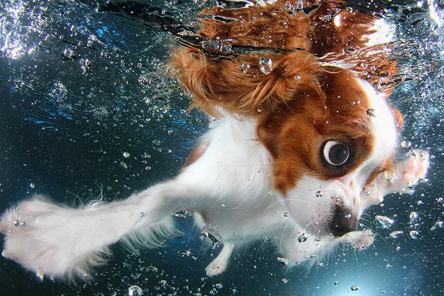 perros en el agua 7