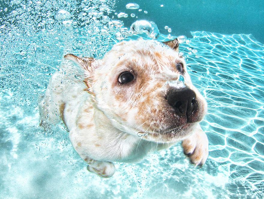 perros en el agua 8