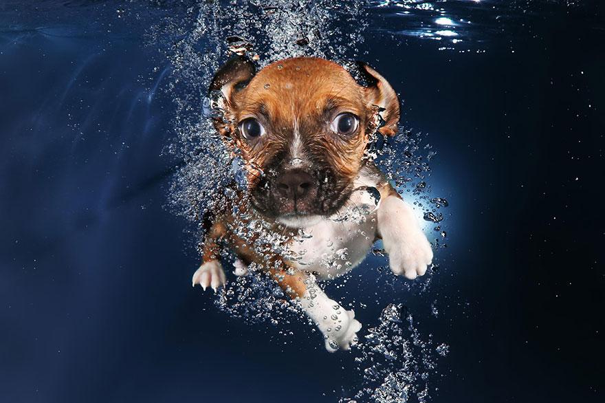 perros en el agua 9