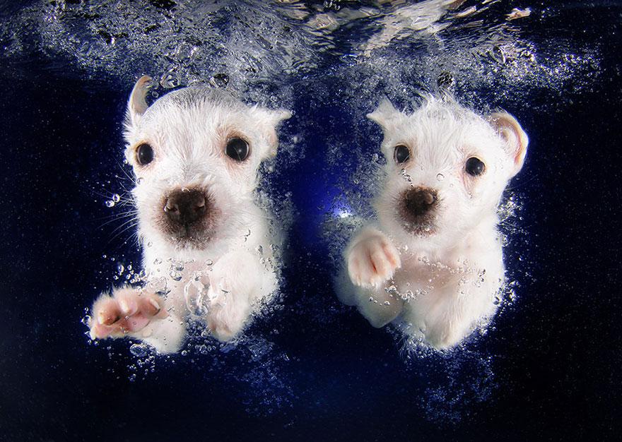 perros en el agua