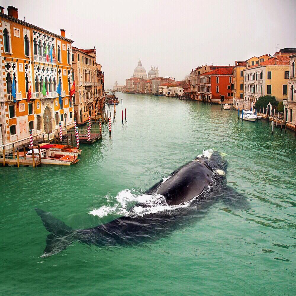 ballena en Venecia