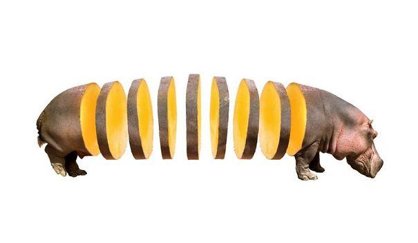 Animales mezclados con frutas 3