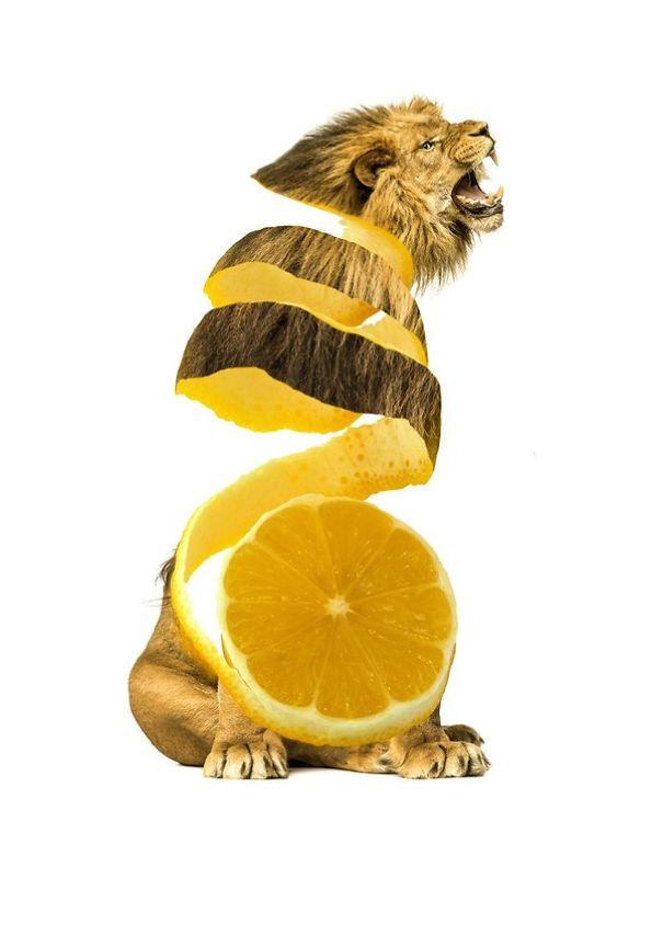 Animales mezclados con frutas 4