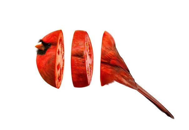 Animales mezclados con frutas 6