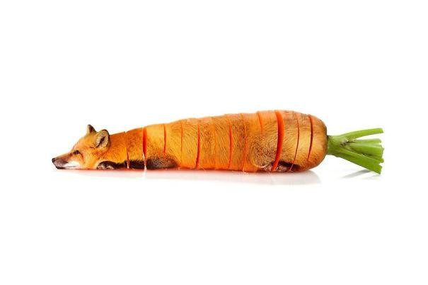 Animales mezclados con frutas