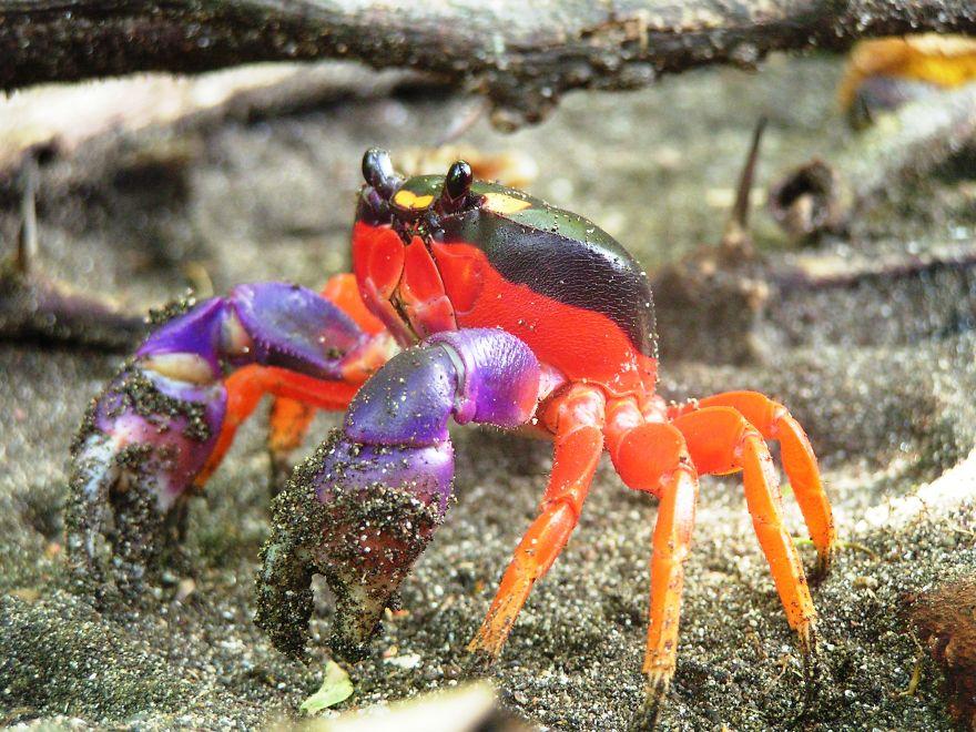 animales colores raros 18