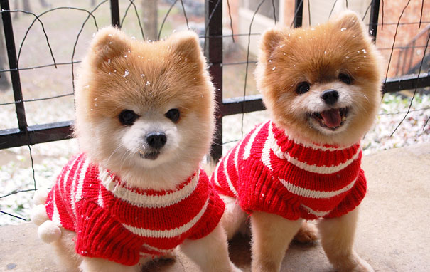 animales gemelos 11