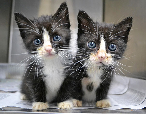 animales gemelos 14