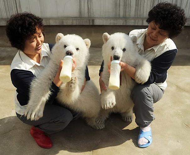 animales gemelos 18