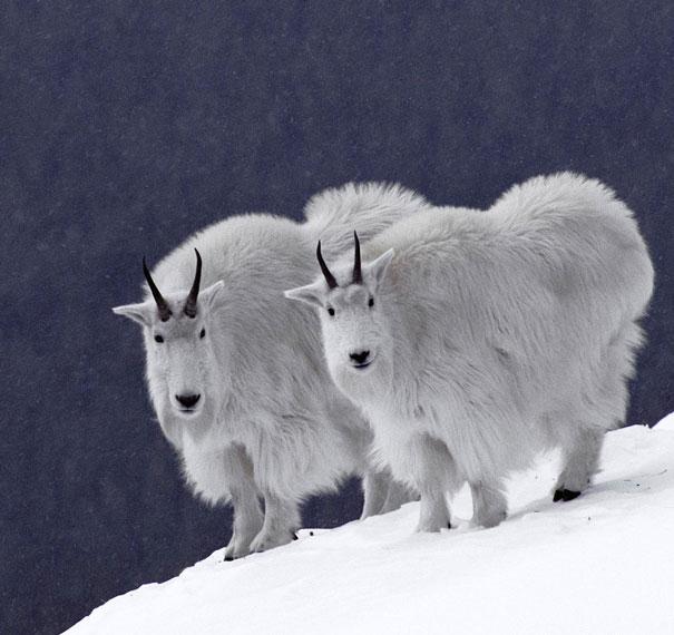 animales gemelos 5